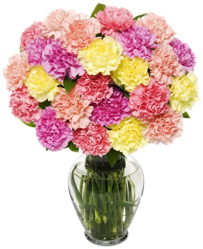 best flowers carnations