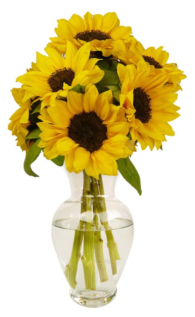 best flowers sunflowers