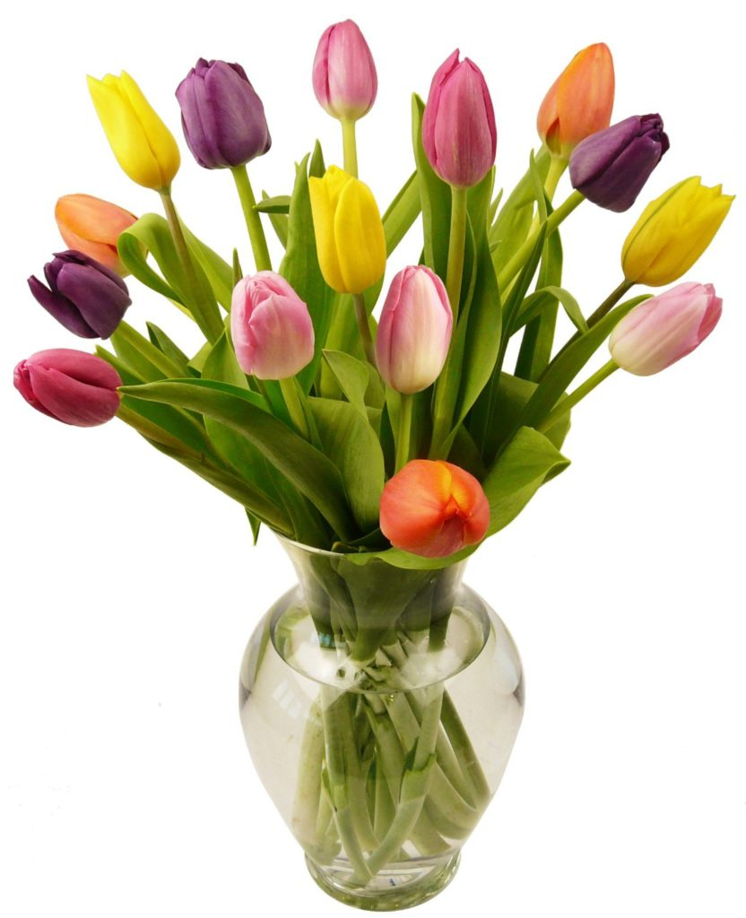 best flowers tulips